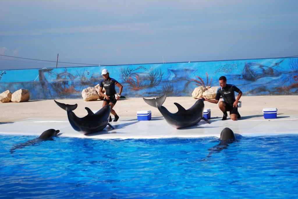 Delfiny w Mediterraneo Marine Park